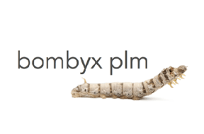 Bombyx-PLM-new